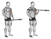 άσκηση Μια μπούκλα δικέφαλων μυών βραχιόνων με τον ολυμπιακό φραγμό ελεύθερη απεικόνιση δικαιώματος