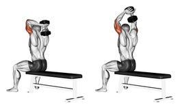 άσκηση Όπλα επέκτασης με έναν αλτήρα από πίσω από το κεφάλι απεικόνιση αποθεμάτων