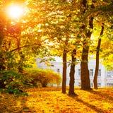 Δάσος ή πάρκο φθινοπώρου Στοκ εικόνα με δικαίωμα ελεύθερης χρήσης
