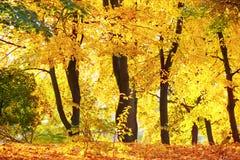 Δάσος ή πάρκο φθινοπώρου Στοκ φωτογραφία με δικαίωμα ελεύθερης χρήσης