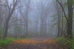 δάσος αντανάκλασης λιμνών φθινοπώρου Στοκ Φωτογραφία
