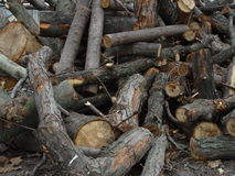 δάσος αποκοπών στοκ εικόνες με δικαίωμα ελεύθερης χρήσης