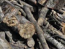 δάσος αποκοπών στοκ φωτογραφίες