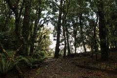 δάσος αστικό Στοκ Εικόνα
