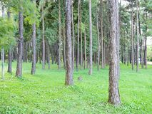 δάσος αστικό Στοκ Φωτογραφίες