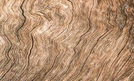δάσος επιφάνειας Στοκ Φωτογραφία