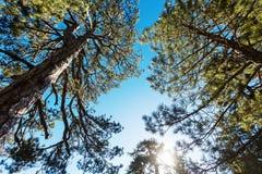 δάσος ηλιόλουστο Στοκ εικόνες με δικαίωμα ελεύθερης χρήσης