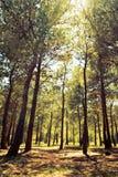 δάσος ηλιόλουστο στοκ εικόνα