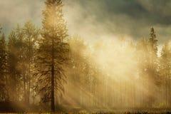 δάσος ηλιόλουστο Στοκ φωτογραφία με δικαίωμα ελεύθερης χρήσης