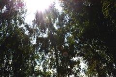 δάσος ηλιόλουστο στοκ φωτογραφία