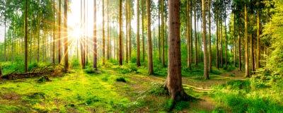 δάσος θαυμάσιο Στοκ Φωτογραφία