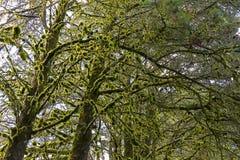 δάσος ι στοκ φωτογραφίες