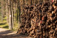 δάσος κούτσουρων Στοκ Φωτογραφία