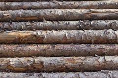 δάσος κούτσουρων Στοκ Εικόνες