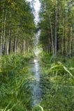 δάσος κολπίσκου Στοκ φωτογραφία με δικαίωμα ελεύθερης χρήσης