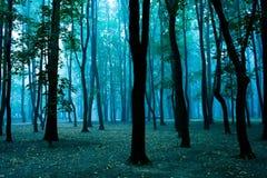 δάσος μαγικό Στοκ Εικόνα