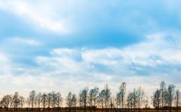 δάσος μικρό Στοκ Φωτογραφίες