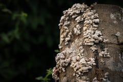 δάσος μυκήτων Στοκ Φωτογραφίες