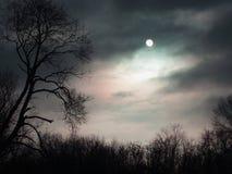 δάσος μυστήριο Στοκ εικόνες με δικαίωμα ελεύθερης χρήσης