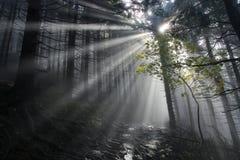 δάσος μυστήριο Στοκ Εικόνες