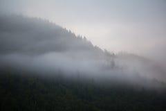 δάσος μυστικό Στοκ φωτογραφίες με δικαίωμα ελεύθερης χρήσης
