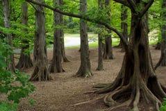 δάσος μυστικό Στοκ Φωτογραφίες