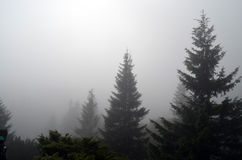 δάσος ομίχλης Στοκ εικόνες με δικαίωμα ελεύθερης χρήσης
