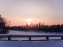 δάσος πέρα από τον ήλιο Στοκ εικόνες με δικαίωμα ελεύθερης χρήσης