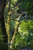 δάσος παλαιό Στοκ εικόνα με δικαίωμα ελεύθερης χρήσης