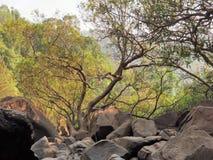 δάσος πετρών Στοκ Εικόνα