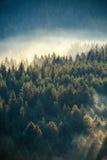 Δάσος πεύκων της Misty στη βουνοπλαγιά σε μια επιφύλαξη φύσης Στοκ Φωτογραφία