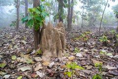 δάσος πεύκων λόφων μυρμηγκιών Στοκ Εικόνες