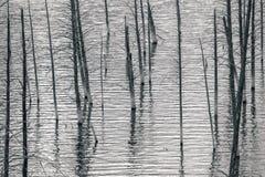 δάσος που συχνάζεται Στοκ εικόνα με δικαίωμα ελεύθερης χρήσης