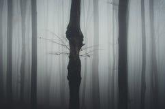 δάσος που συχνάζεται Στοκ φωτογραφία με δικαίωμα ελεύθερης χρήσης