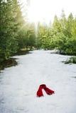 δάσος που χάνεται Στοκ εικόνα με δικαίωμα ελεύθερης χρήσης