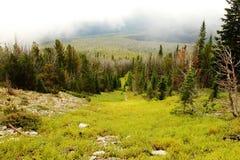 δάσος που χάνεται Στοκ φωτογραφία με δικαίωμα ελεύθερης χρήσης