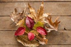 δάσος ροδιών Οκτωβρίου σταφυλιών διακοσμήσεων κάστανων φθινοπώρου Στοκ Φωτογραφίες