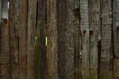 δάσος σανίδων ανασκόπηση&sigm Στοκ φωτογραφία με δικαίωμα ελεύθερης χρήσης