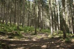 δάσος σε Canazei Στοκ Εικόνα