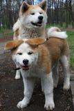 δάσος σκυλιών Στοκ Εικόνα