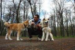 δάσος σκυλιών Στοκ Εικόνες