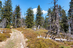 Δάσος στη μεγάλη σειρά Fatra, Σλοβακία Στοκ φωτογραφία με δικαίωμα ελεύθερης χρήσης