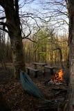 δάσος στρατοπέδευσης στοκ εικόνα με δικαίωμα ελεύθερης χρήσης