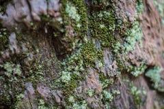 δάσος συστάσεων Στοκ εικόνες με δικαίωμα ελεύθερης χρήσης