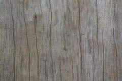 δάσος συστάσεων Στοκ φωτογραφία με δικαίωμα ελεύθερης χρήσης