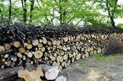 δάσος σωρών Στοκ εικόνα με δικαίωμα ελεύθερης χρήσης
