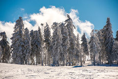 δάσος σύννεφων Στοκ Φωτογραφίες