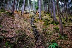 δάσος την πρώιμη άνοιξη, μετά από το χιόνι Στοκ Εικόνα