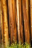 δάσος τοίχων σύστασης ανασκόπησης Στοκ Εικόνες