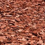 δάσος τσιπ Στοκ Φωτογραφίες